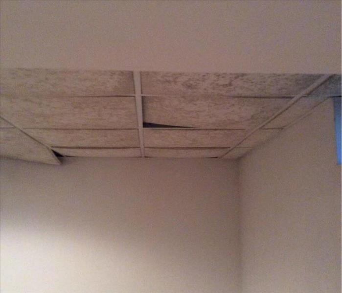 Mold Remediation Drop Ceiling in Basement Home Covered in Mold